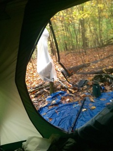 The view from inside my tent.